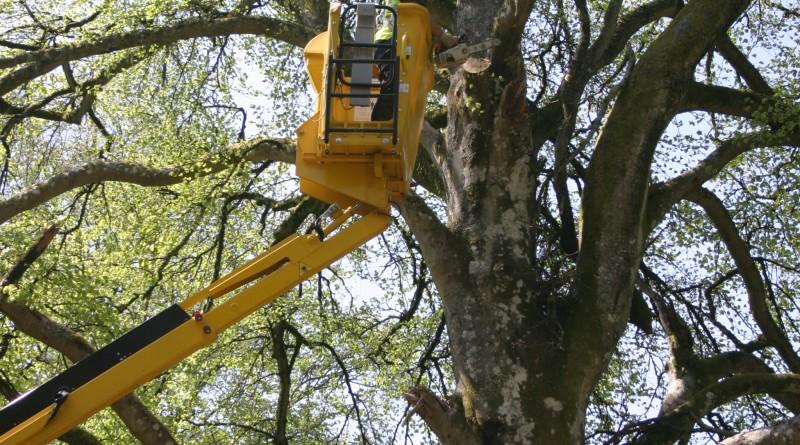 ipaf:arbres